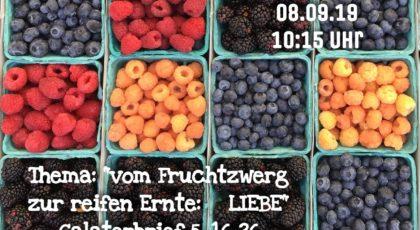 Vom Fruchtzwerg zur reifen Ernte: Liebe